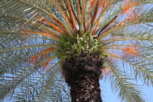 fern growing in a palm downtown