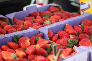 Farmers Market, West Palm Beach06