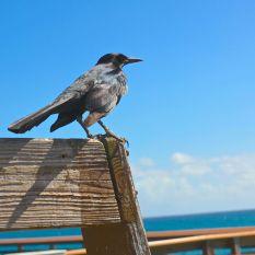 Juno Beach, FL13